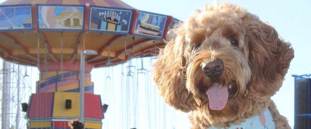 Dog-Friendly Dining and Cruises at Navy Pier